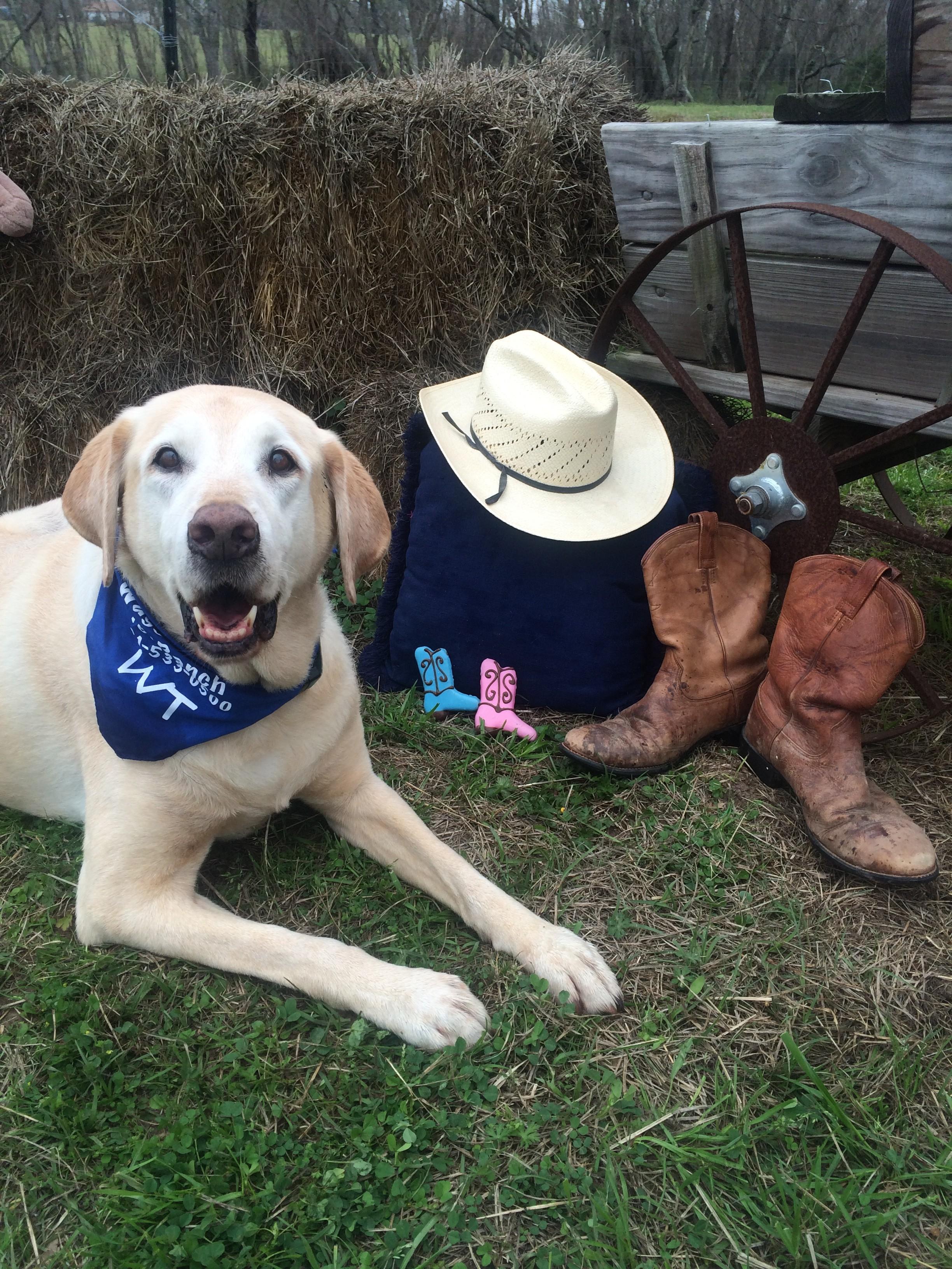 Wyatt cowboy 2